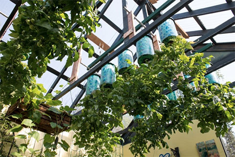 Expand the Growing Space in Your Greenhouse: Turn it Upside Down!