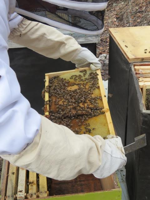 David McBurney's honey bees