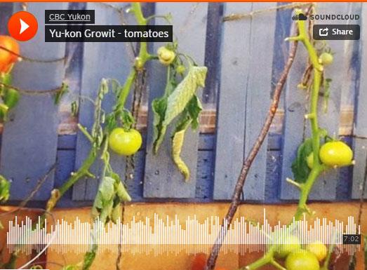 Yu-Kon Grow It: Toasty Tomatoes