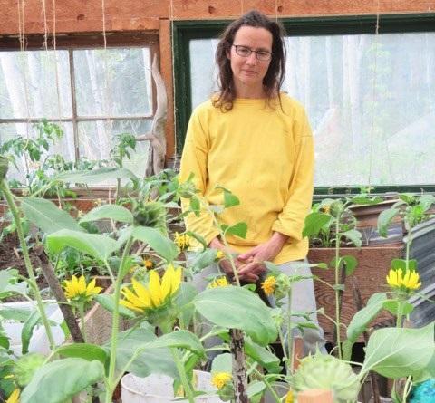 Suzanne's Sad Sunflowers