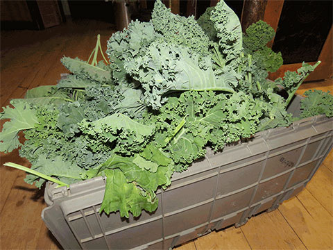 52 Buckets of Kale in the Hall