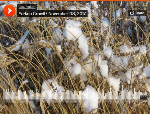 Yu-Kon Grow It: Cold Sweat