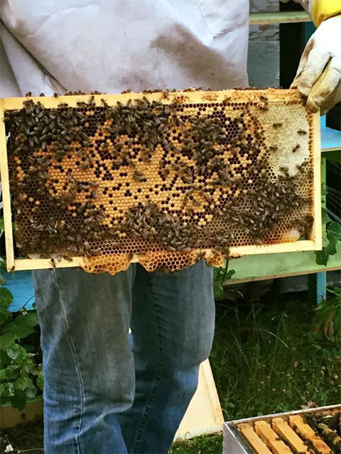 Bee Whyld Produces 'the Champagne of Honey'