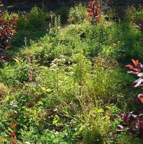 The Forest Garden of Agnes Seitz