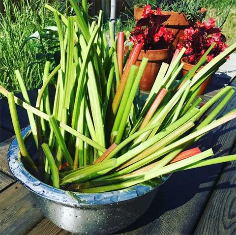Bring on the Rhubarb!