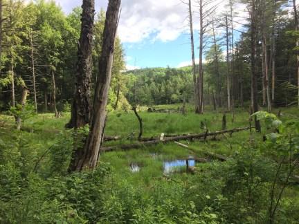 packforest6