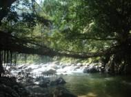 jembatan-akar Bayang