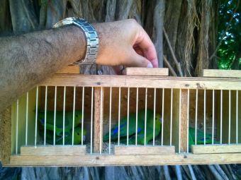 Fiscal Ambiental do Natal - GAAM - DEPREMA - Resgate de pássaros - (1)