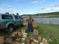 Fiscal Ambiental do Natal - GAAM - DEPREMA - Resgate de pássaros - (121)