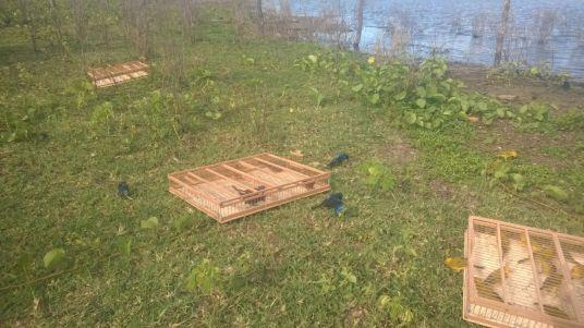 Fiscal Ambiental do Natal - GAAM - DEPREMA - Resgate de pássaros - (156)