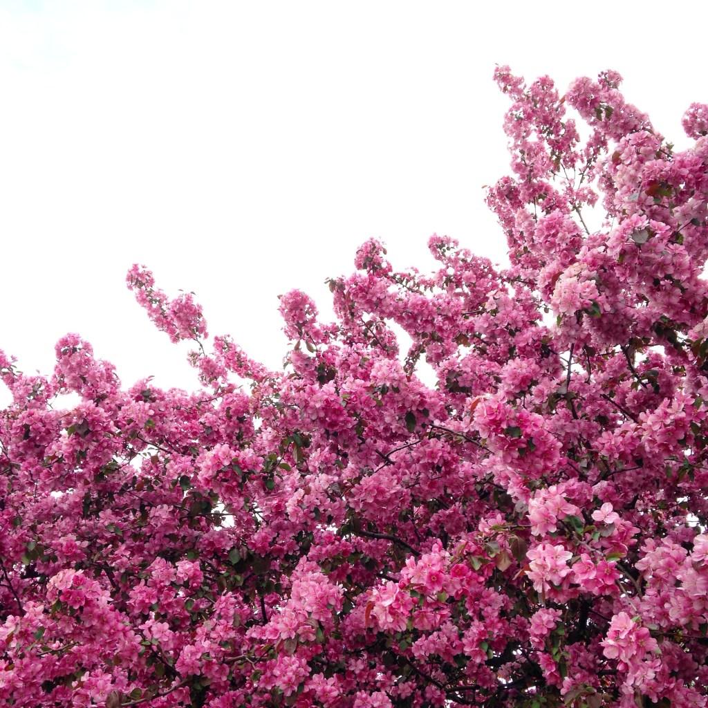 Birthday flowering tree