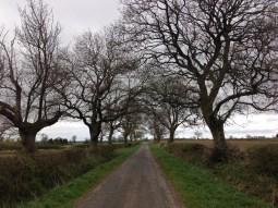 Countryside run