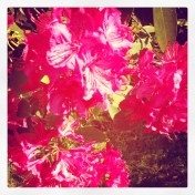 Oh pretty flowers