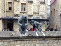 Baboon's taking in the sites