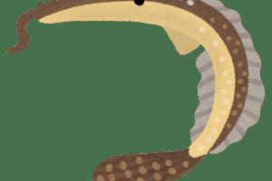 ウケグチノホソミオナガノオキナハギ