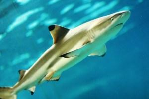 サメとエイの見分け方は?