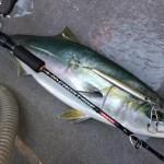 メジャークラフトロッドで大物釣り