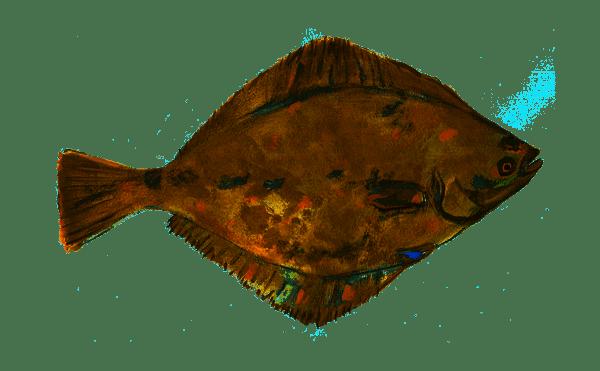 カレイ釣りで投げ釣りをマスター!