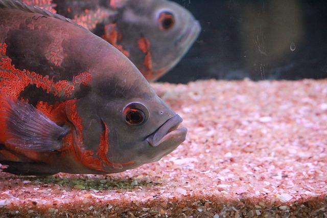 外部フィルターは大型魚におすすめ
