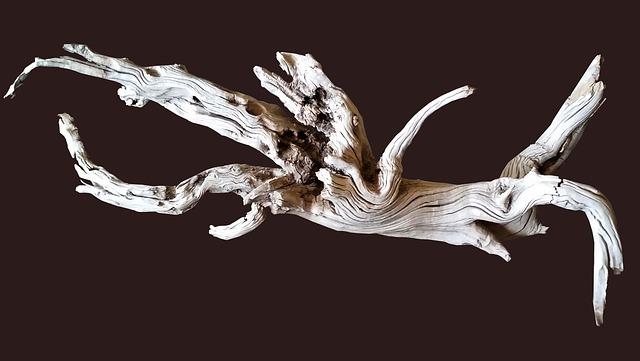 金魚の飼育に流木は向かない