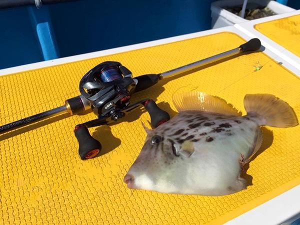 カワハギ釣りのタックル