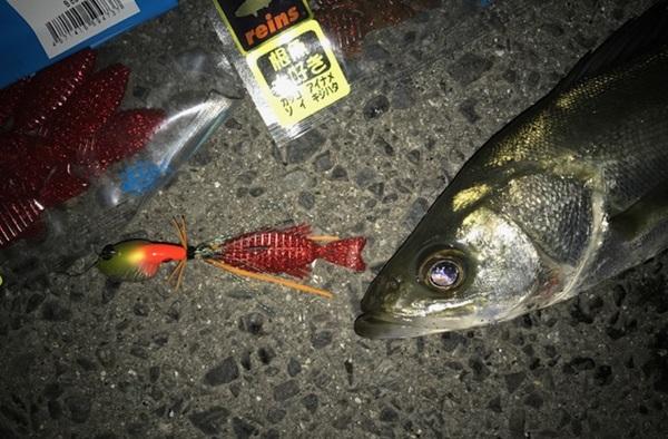 根魚フラットで色んな魚を釣ろう!