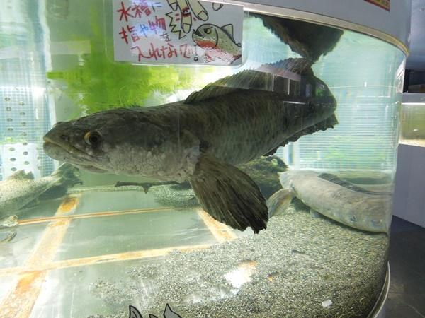 東京タワー水族館は世界各地の珍魚がいっぱい