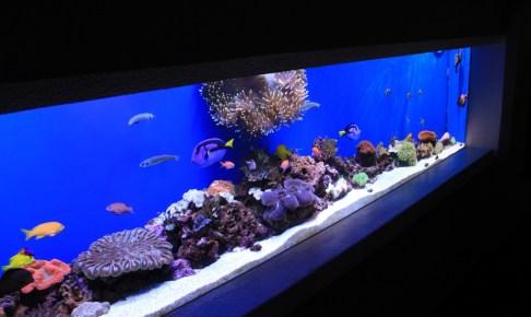 マーフィードは海水魚製品が多い