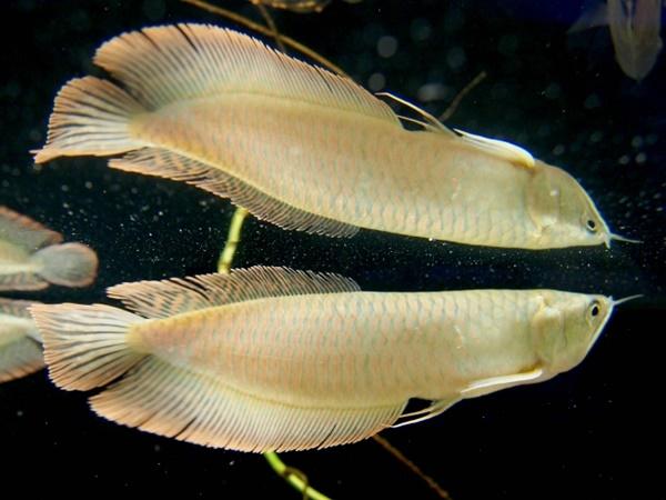 足立区生物館では魚も展示