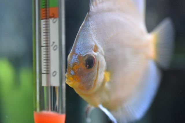 石巻貝の最適な水温は?