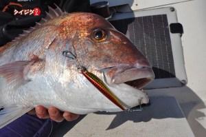 タイジグで真鯛を釣ろう