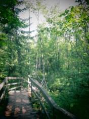 chemin dans la forêt - Val Jalbert (Québec)