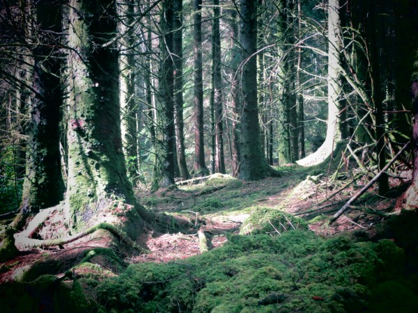 forêt -Glencoe Lochan