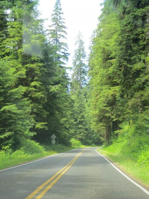 forêt autour du lac Quinault