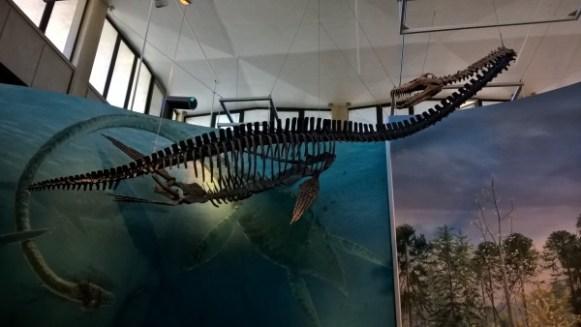 squelettes de dinosaure au Burke Museum - Seattle
