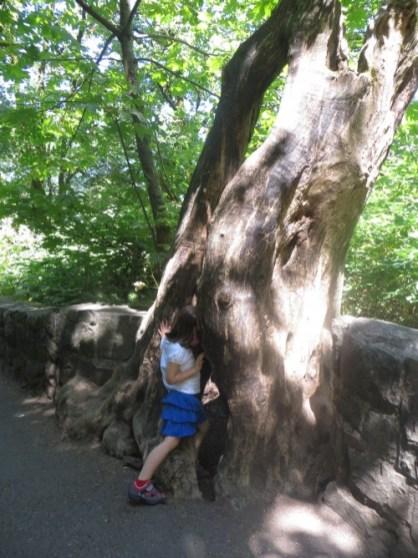 arbre - Multnomah Falls - Oregon