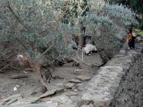 les chats de Port Lligat