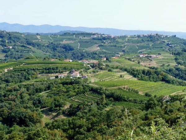 panorama slovène depuis Šmartno