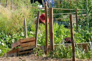 femme jardinant dans un potager
