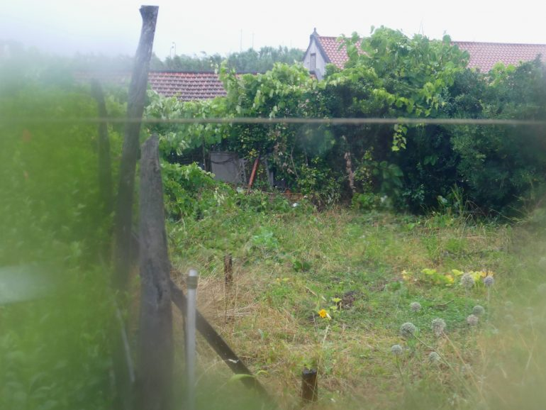 jardin sous la pluie santa cruz das Flores