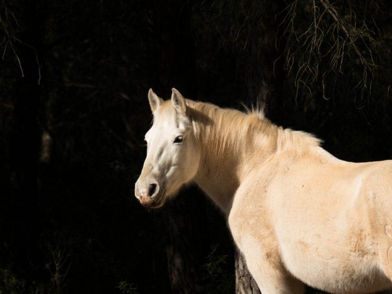 cheval blanc - randonnée cit'art de Vic La Gardiole