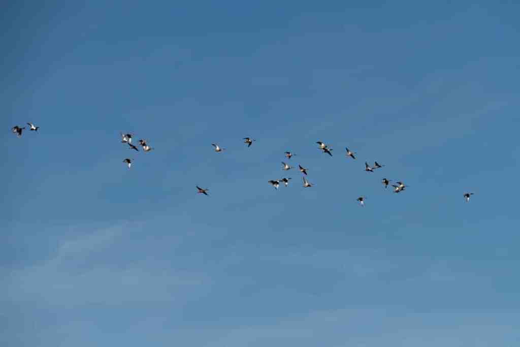 des oiseaux au dessus du Sentier du Grand Castelou, Narbonne