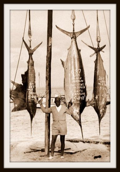 Vitorino Martins with a good day catch @ paradise Island in early November 1963
