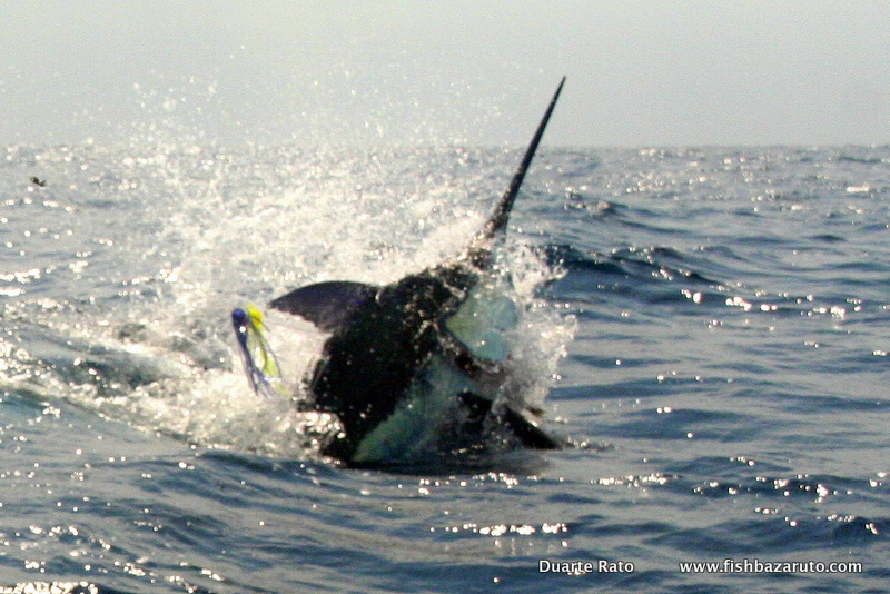 Blue Marlin Mozambique & Africa´s East Coast