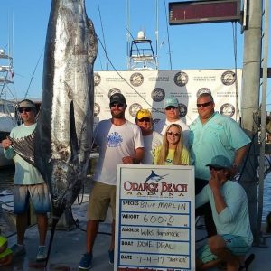 Congratulations to the Done Deal´s for their winning 600 pound fish in the Gulf of Mexico that won the 2017 Blue Marlin World Cup