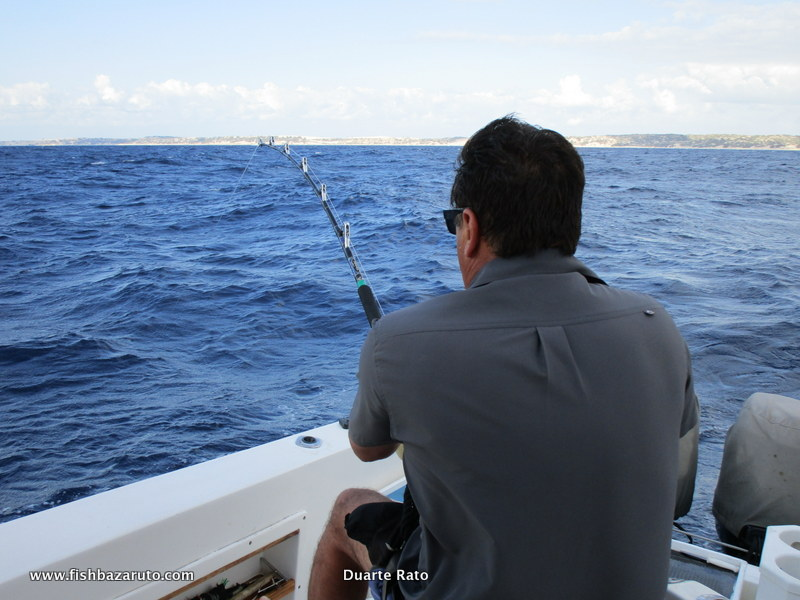 On a marlin trip to Bazaruto, you will encounter all sorts of denizens from the deep!