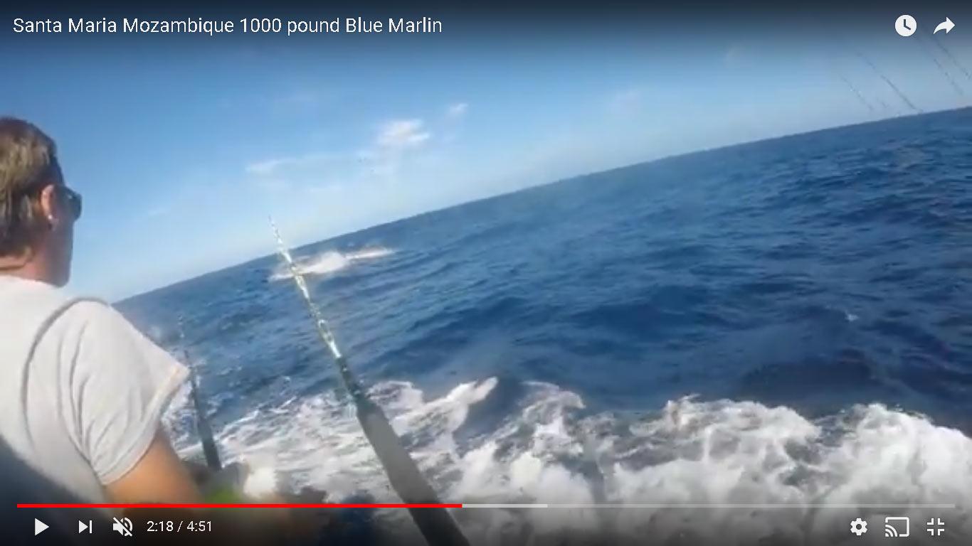 Video: Inhaca Island 1000lb Blue Marlin