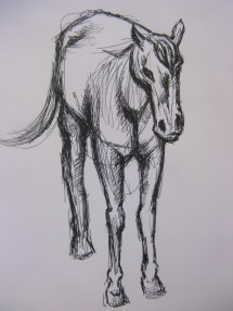 horse from front