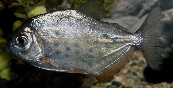 What Fresh Water Fish