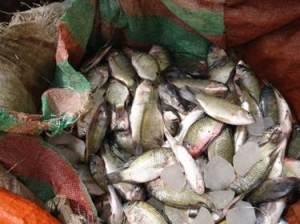 Lake Nangbeto fishery 02 (Togo)